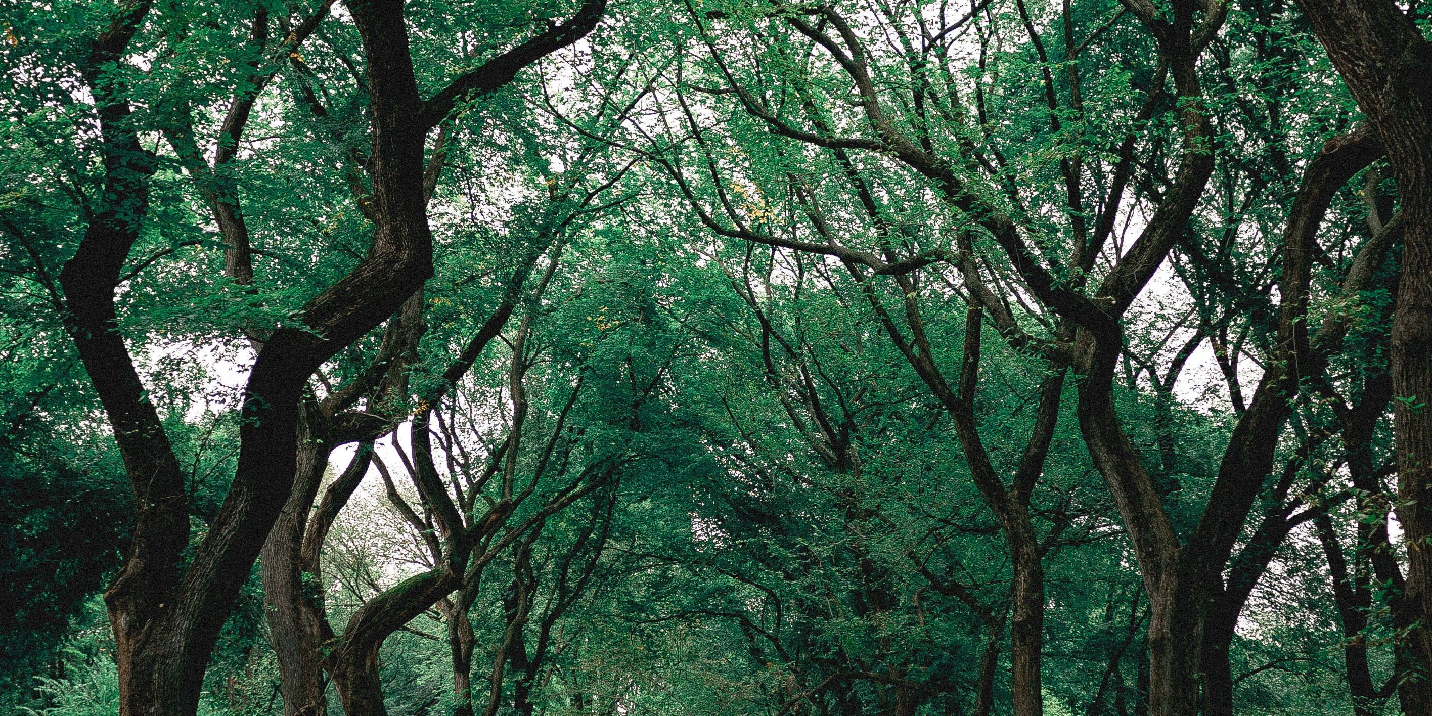 branches-central-park-environment-1770809